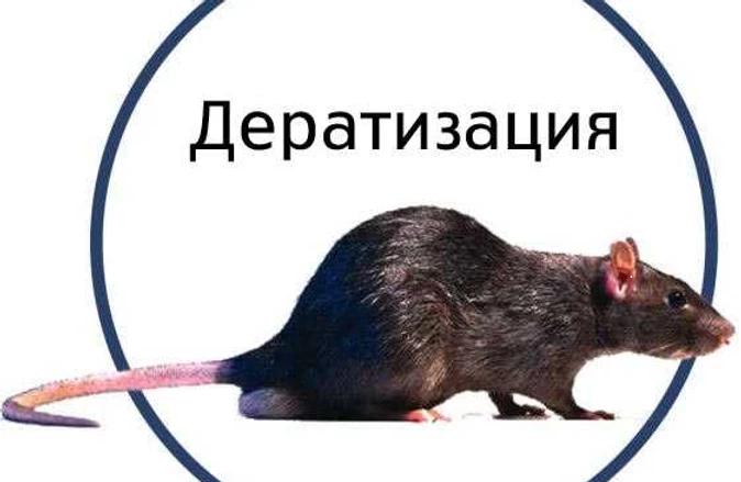 Дератизация уничтожение грызунов