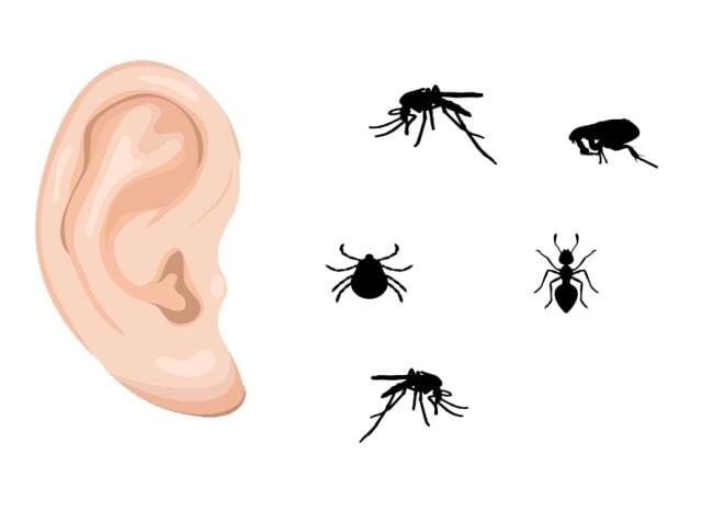 насекомые в ухо