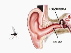 канал ушной