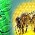 яд пчел