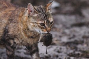 кошка мышь