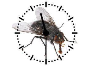 мухи живут