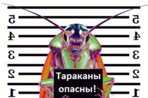 Тараканы опасны